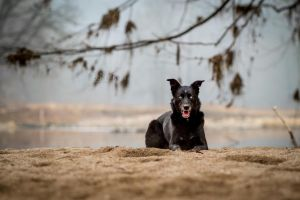 Teutonic Dog by BlackPepperPhotos