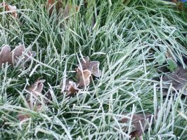 Frosty Grass by divinekatt