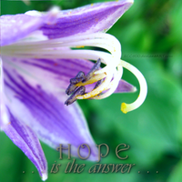 Hope is the Answer . . . by ECC500