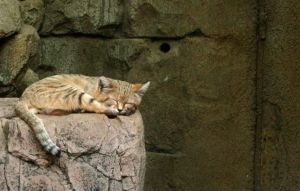 Sand dune cat sleeping... by Gib-Art-and-Pinups