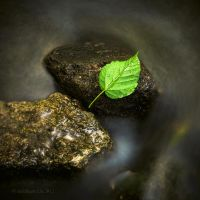 Zen silent leaf know by lwc71