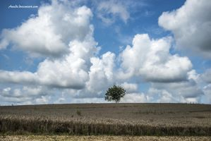The Lonely Tree by Aneede