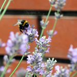 Summer Bee by head-in-the-cloud
