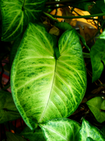 green leaf1 by lampshaded-stock