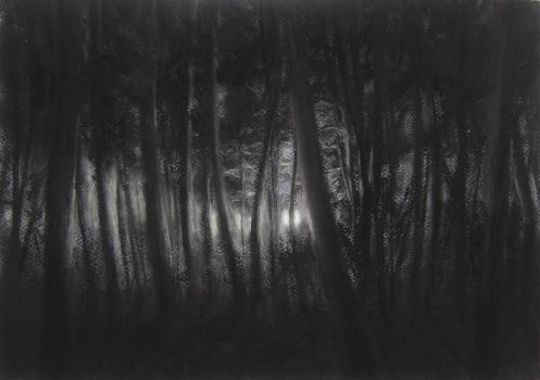 Evening Forest by El-RoLo