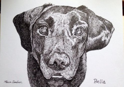 Commissioned Pet Portrait of Bella by mariangrose