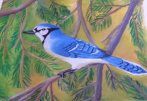Blue Jay by sweetmisery11
