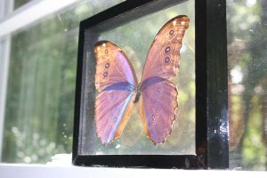 the butterfly window by Nyneve2