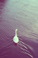 Swan by Emiliee91