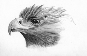 Golden eagle sketch by Lizandre