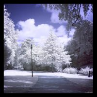Can you see the light IR by caithness155