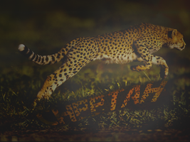 Cheetah Wallpaper by Kdawg24