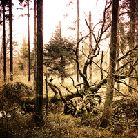 Forest VI by UlfStubbe