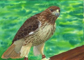 Red Tail by FinnishFox
