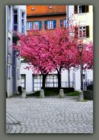 spring in the city by Mittelfranke