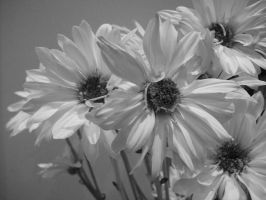Black and white flowers by Bookmouse