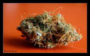 .:Beautiful Buds Serie:. II by Club-Marijuana