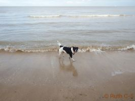 Waterfront dog by Ruth-1