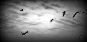 Birds by Nathan-Ruby