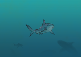 shark by White-Tean