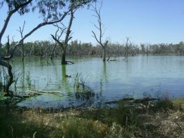 Bluegum Swamp by Drake-Stock