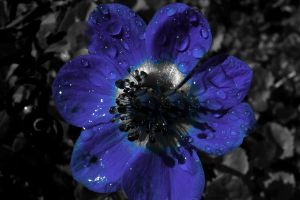 blue flower by crystalsunshine155