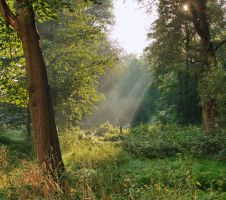 September morning by starykocur