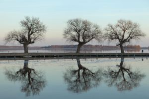 Three trees by theGuffa