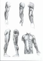 anatomy + shading study by saTHOMASo