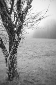 tree by twillit