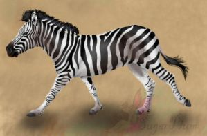 Zebra running by emmy1320