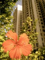 Flower and building by kimmyjune