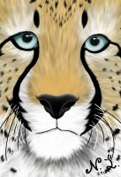 Zoran the cheetah by LigerStar84