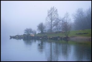 Today morning, fog in the Park. by mic-ardant