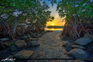Sunset-Between-Mangrove-on-Singer-Island by CaptainKimo