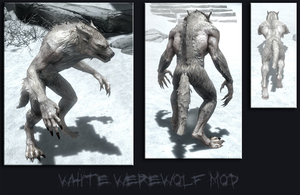 White Werewolf Texture by crowhitewolf