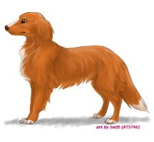 FP comm. 4 - Toller by shelzie