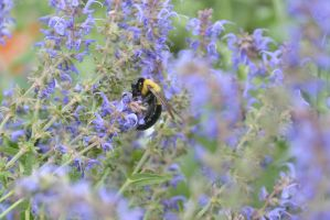 The Big Fuzzy Bumble Digging In the Buds 5 by Miss-Tbones