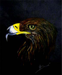 Eagle by adnerby
