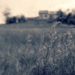 In the meadow by 2jL