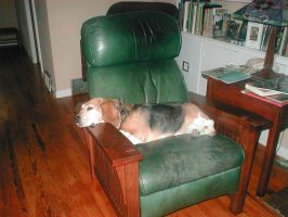 Sophia relaxying in the chair by putergrl