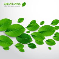 Create Realistic Vector Leaves - Ai TUT by lazunov