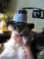 My cat in Blair's hat XD by Rens-twin