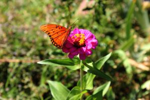 Butterfly On Flower by Thepieholephotograph