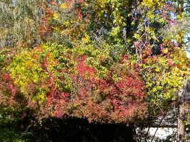 Autumn Color in New England 8 by Reddawgi