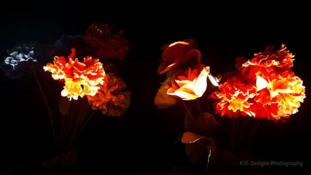Night Flowers by kyofanatic1