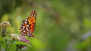 Butterfly 2 by AustriaWorks