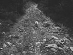 The path of dog by Taychimono