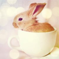 Cute in a cup by EliseEnchanted