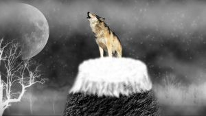 Wolf on a Hill by Hardii
